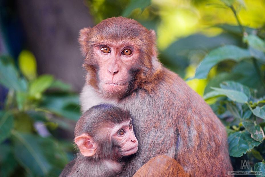 Трэвел фотография - дикие животные
