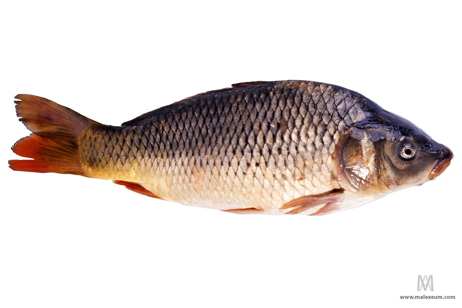 Рыба на белом фоне