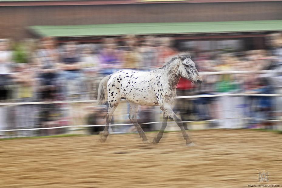 Wild Western Festival, фестиваль вестерна, Можайск, аванпост, лошади, фотосъемка соревнований