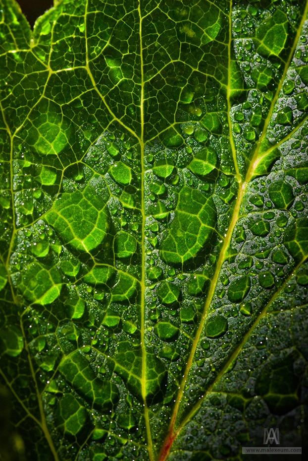Raindrops of water on freshness green foliage. Macro shot.