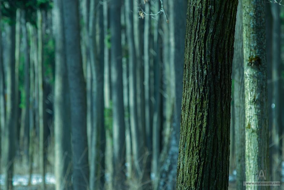 Фотографии леса